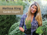 Visit Melissa Kings site